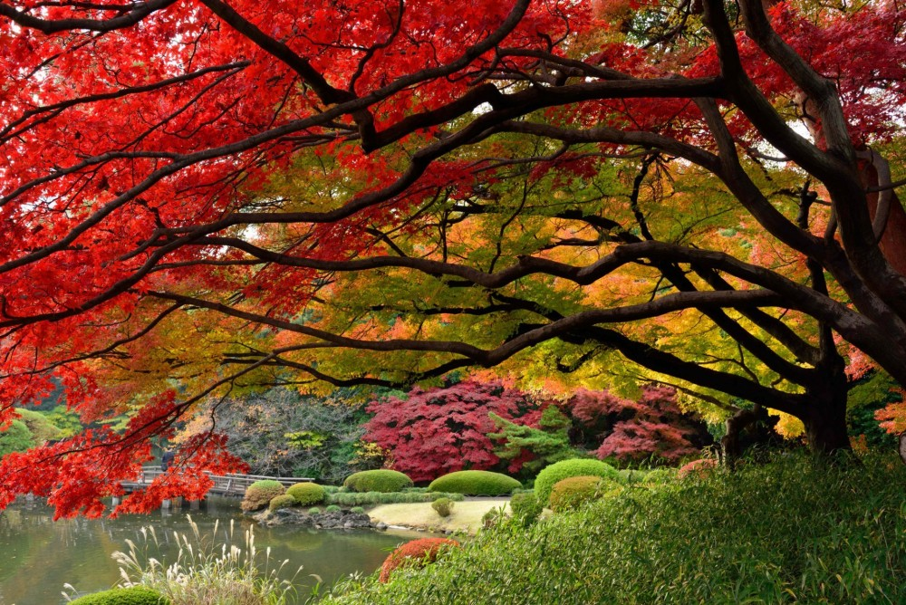 japan-tokyo-japanese-garden-colors-of-autumn-december