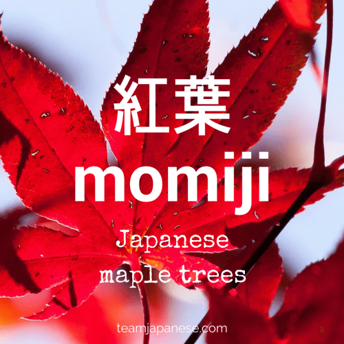 momiji-Japanese-vocabulary-autumn-word
