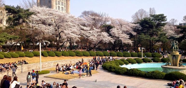 Вълноломни разговори: Студентски живот в Корея – от библиотеката до забавленията